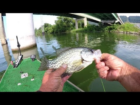 Catching Live Bait For Summertime Crappie Fishing