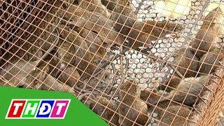 Chợ chuột đồng lớn nhất miền Tây vào vụ | THDT