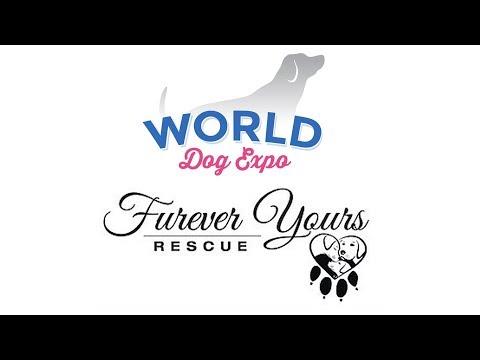 Dorothy Ochotny From Furever Yours Rescue    World Dog Expo 2018