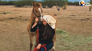 Baby Wild Horse Comes WAY Out Of Her Shell | The Dodo