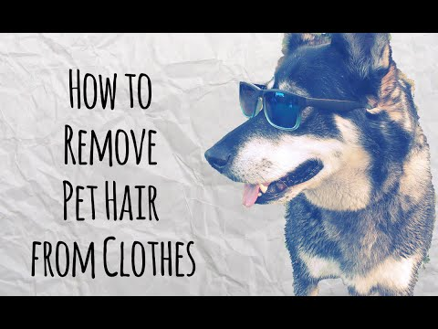 How To Get Pet Hair Off Your Clothes Doovi