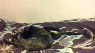 Кошки после операции и снятия попонки