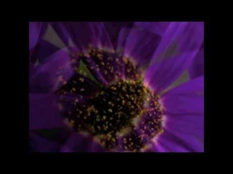 Michael O'Dwyer  Perfumed Garden  LittleFlock