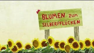 Selbstbedienung auf dem Blumenfeld - Der Ehrlichkeitstest | Karambolage | ARTE