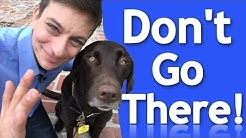 How to EFFECTIVELY Teach your Dog Boundaries