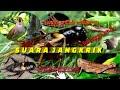 Suara Jangkrik Untuk Masteran Burung Dan Pengusir Tikus  Mp3 - Mp4 Download