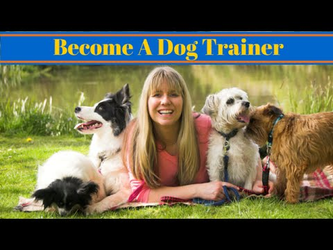 How to Become a Dog Trainer - Careers With Dogs - YouTube