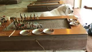 那須烏山の鮎簗『ひのきや』さん。 ワンコと一緒に鮎を焼きながら食べら...