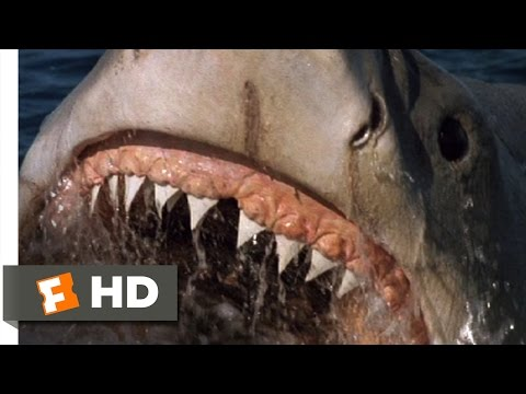Jaws: The Revenge (2/8) Movie CLIP - A Big Fish (1987) HD