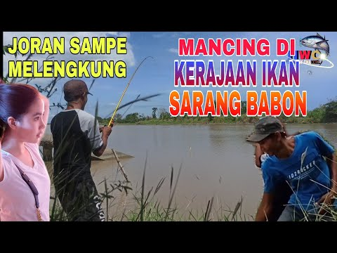 Fishing Lunga In The Estuary River Makes It Very Exciting   Fishing Ambyar   Fishing Mania