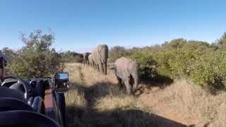 Kariega Game Reserve Safari Trip -- July 2014