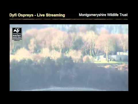 April Dyfi Ospreys Tracking Blue