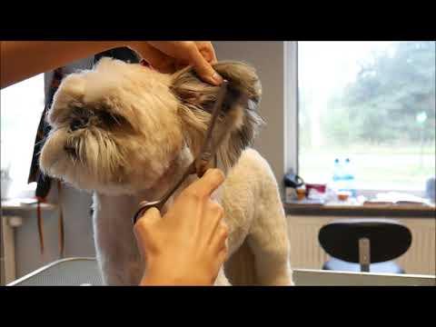 Grooming Guide   Grooming Shih Tzu | Best Dog Grooming Tips