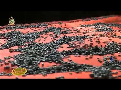 เรื่องเล่าเช้านี้ ผงะ แมลงปีกแข็งยึดบ้านที่ขอนแก่น-กองทัพแมงเม่านับหมื่นตัวบุกตอมแสงไฟทั่วอุดรฯ