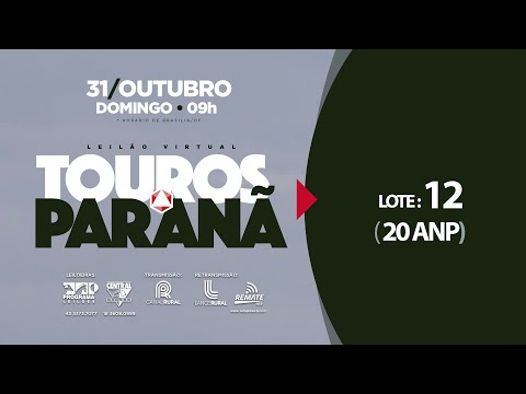 LOTE 12