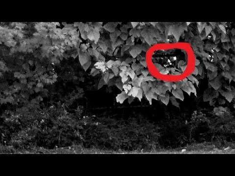 Creature with Glowing Eyes Caught on Tape