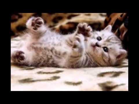 Картинки котят)✽