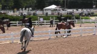 Video of COASTAL ridden by GRACE JACKSON from ShowNet!