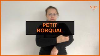 BIOLOGIE MARIN - Petit rorqual