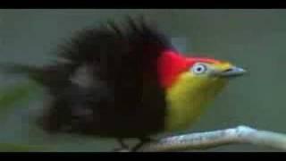 �������� ���� The Dancing Bird ������