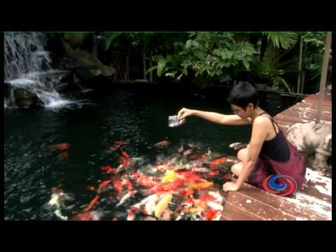 Phuket Attractions – The Upside Down House, Phuket Botanical Gardens & Phuket FantaSea