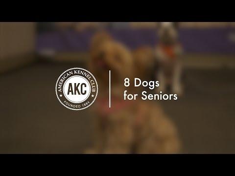 8 Dogs for Seniors