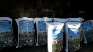 Mushroom Compost Test 3