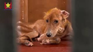 Stray Animal Welfare Activity-Utkarsh Global Foundation (Formerly known as Utkarsh Star Mitra Mandal