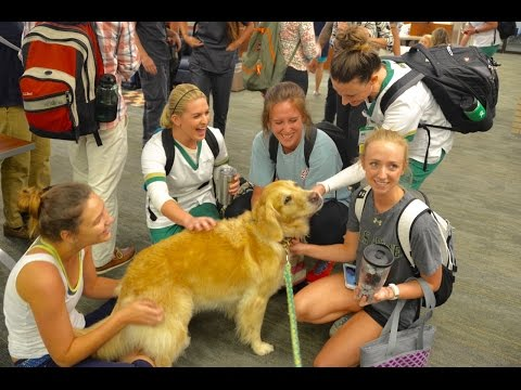Snitch - USF Health Therapy Dog