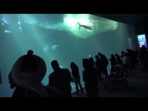 Sea Museum Visit