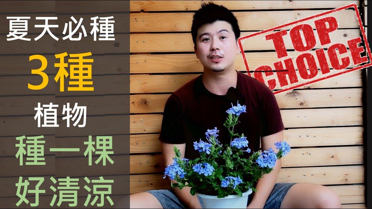 【夏天必種三種植物】今天讓我們清涼一夏。