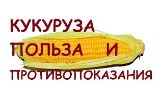 Кукуруза. Польза и вред для здоровья.
