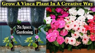 How To Grow Vinca Flower Plant Upwards Down ll No Space Gardening ll Use of Waste Bottles as Planter