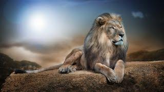 Красивые картинки под музыку (Животные) cмотреть видео онлайн бесплатно в высоком качестве - HDVIDEO