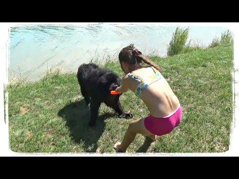 ПРИКОЛЫ С ЖИВОТНЫМИ подборка   FUN WITH ANIMALS Compilation #477