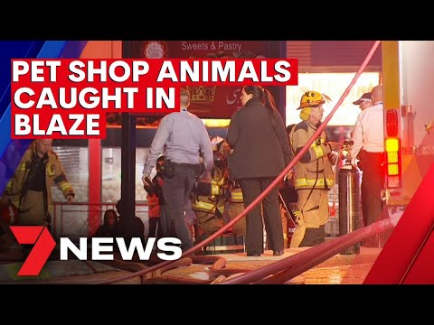 Several animals die after fire tore through a Logan shopping complex | 7NEWS