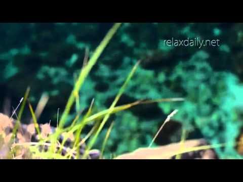 Instrumental Music Relaxing, Light, Easy, Background Season 3
