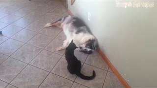 Funny clip Cats And Dogs Funny Cats vs Dogs Funny Animals Compilation