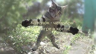 Котенок не кузнечик, а чемпион по игре в когти! Kitten' claws