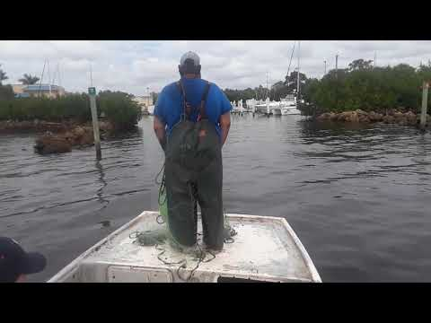 Cast Netting Mullet Gabe Style Roe Mullet Fishing