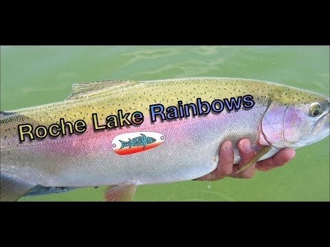 Fishing For Huge Rainbow Trout - Roche Lake BC - FishGawd