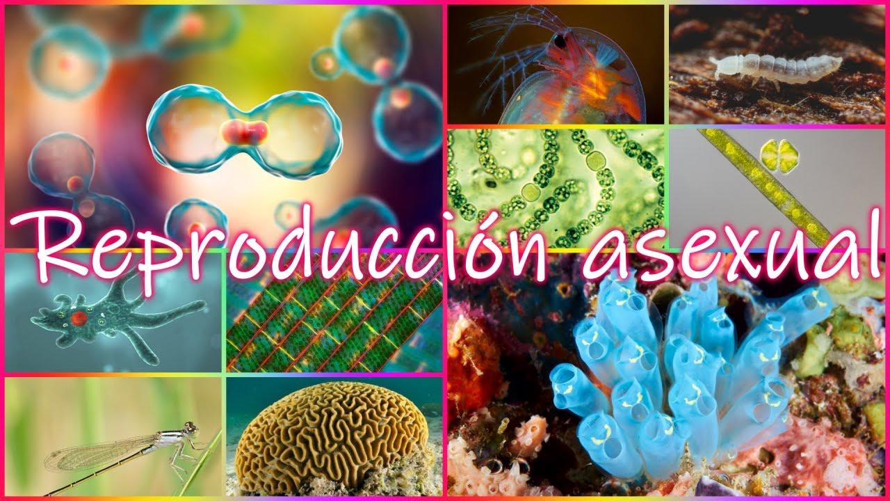 5 Tipos De Reproducción Asexual En Animales Organismos Unicelulares Y Pluricelulares Youtube