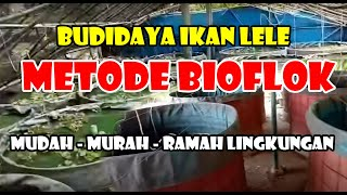 Budidaya Lele Bioflok - Ciampea - Bogor - Jawa Barat