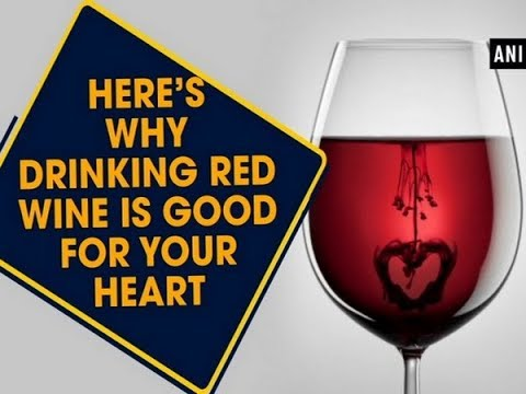 wine article Here is why drinking red wine is good for your heart  ANI News
