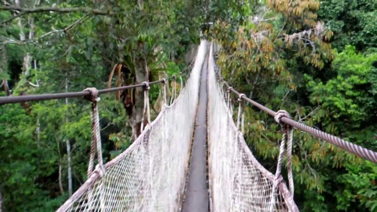 & Amazon Rainforest Canopy Walkway - YouTube