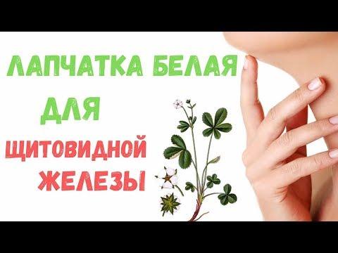 Растение пятипал или Лапчатка белая: описание и способы приготовления, польза и вред.