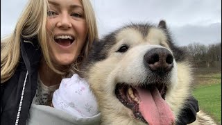 DAY IN THE LIFE WITH MALAMUTES | ANXIETY KICKS IN MATERNITY VLOG