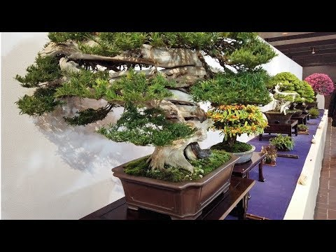93rd KOKUFU TEN BONSAI EXHIBITION  2019 PART 1  (video 1/2) Tokyo Feb.9~12