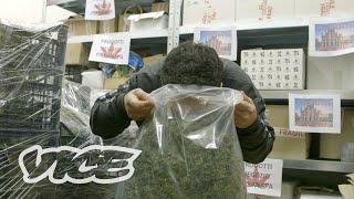 Nella più grande fabbrica italiana di marijuana legale