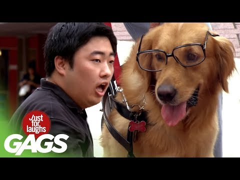 Dog Getting Its Geek On! - JFL Gags Asia Edition